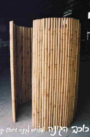 גדר במבוק מושחל| גובה 2*2